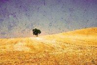 100 años de soledad | 100 years of solitude