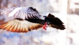 No dejes de volar   Don't stop flyin'