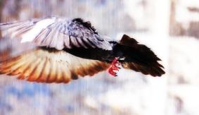 No dejes de volar | Don't stop flyin'