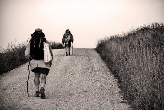 En busca | In search