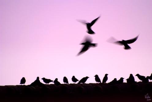 Libertad de volar | Freedom of flying