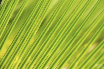 Verde es la esperanza | Green is the hope