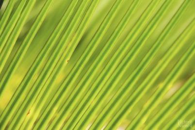 Verde es la esperanza   Green is the hope