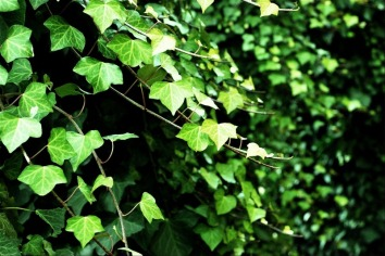 Silencio verde   Green silence