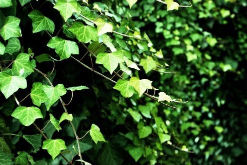 Silencio verde | Green silence