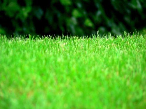 Verde | Green