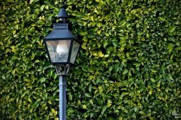 Luz de Vida | Light of Life