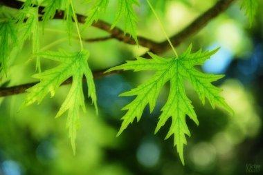 Sé Naturaleza | Be Nature