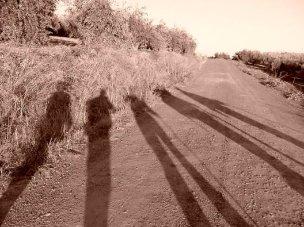 Sombras   Shadows