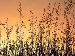 Puesta de sol de verano | Summer sunset