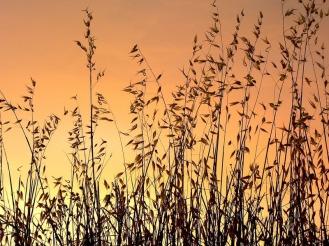 Puesta de sol de verano   Summer sunset