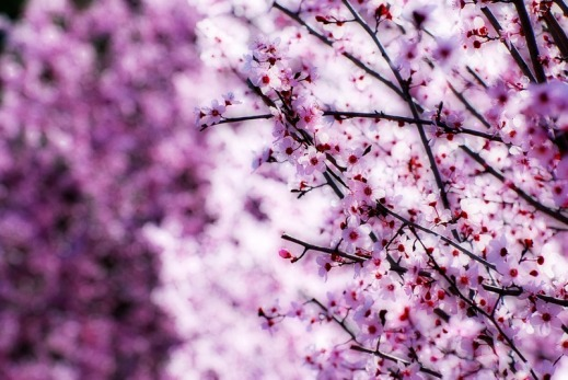 Estamos en primavera   We are in spring