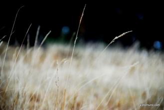 autumn-2011-01