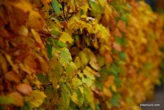 autumn-2011-03