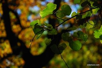 autumn-2011-12