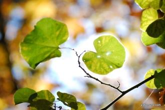 autumn-2011-13
