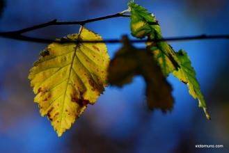 autumn-2011-15