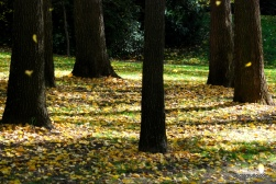 autumn-2011-18