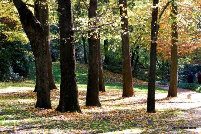 autumn-2011-19