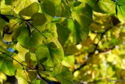 autumn-2011-24