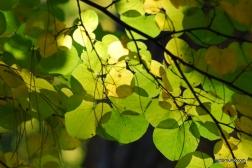autumn-2011-26