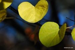 autumn-2011-27