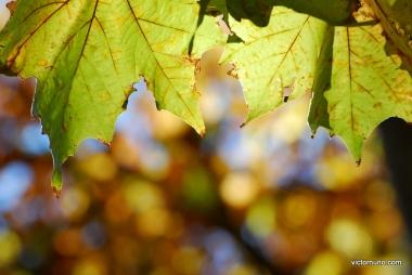 autumn-2011-33